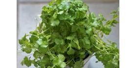 useful-kitchen-herb